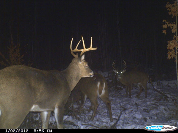 trail cam photo of deer